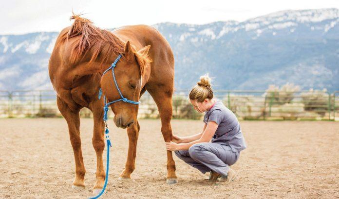 horse lover gift